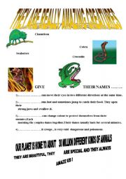 English worksheet: amazing creatures