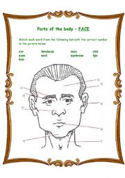 English Worksheet: Parts of the body - Face