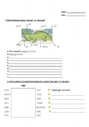 English Worksheets: body descriptions