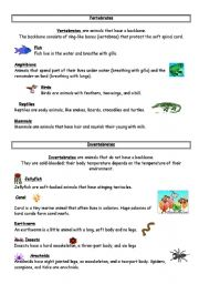 English Worksheet: vertebrates / invertebrates