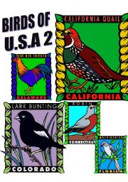 English Worksheets: BIRDS OF U.S.A. TWO.