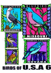 English Worksheets: BIRDS OF U.S.A. SIX.