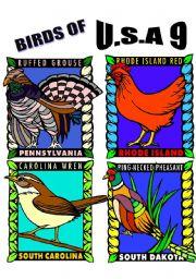 English Worksheets: BIRDS OF U.S.A. NINE.
