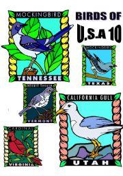English Worksheets: BIRDS OF U.S.A. TEN.
