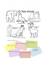 English Worksheets: polar animals