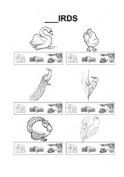 English Worksheets: Where do the birds live?