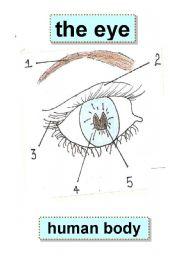 English Worksheets:  EYE - BODY PARTS - HUMAN BODY - eyebrow,eyelid,eyelashes,iris,pupil