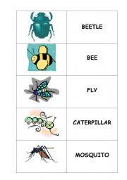 English Worksheets: bugs memory