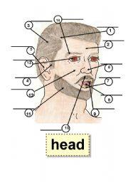 English Worksheets: HEAD - BODY PARTS - HUMAN BODY - Flashcard - 1 part,5 ear,9 tooth,2 forehead,6 nose,10 mustache,3 hair,7 lip,11 beard,4 sideburn,8 tongue,12 cheek,13 eye,14 eyebrow