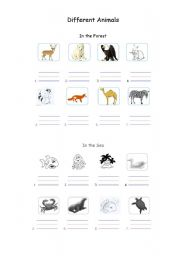 English Worksheets: Different animals