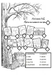 English Worksheet: Autumn vocabulary