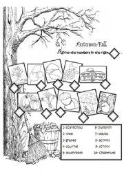English Worksheets: Autumn vocabulary