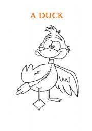 English Worksheets: A Duck