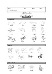 English Worksheets: Vocabulary: Animals (sea animals, insects, other)