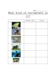 English Worksheets: What kind of vertebrate is it?