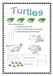 English Worksheets: Turtles