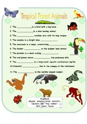 English Worksheets: Tropical Forest Animals