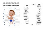 English Worksheets: body matching