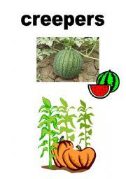 English worksheet: Vocab-Plants