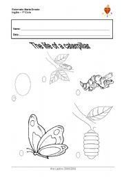 English Worksheets: The life of a caterpillar