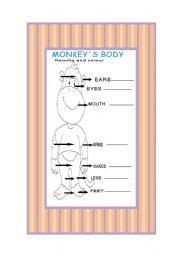 English Worksheets: monkey�s body