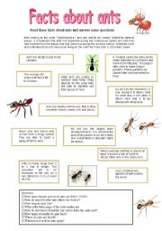 English Worksheets: Facts about ants