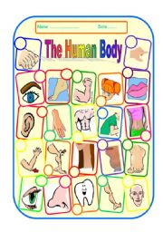 English Worksheet: THE HUMAN BODY and FACE - worksheet