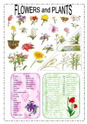 English Worksheet: Flowers and plants