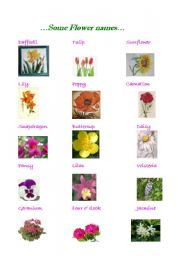 Diffe Types Of Flowers Names With Pictures Flowers Healthy