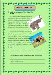 English Worksheets: animal reading with questions