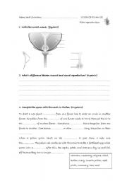 english worksheets planr reproduction test. Black Bedroom Furniture Sets. Home Design Ideas