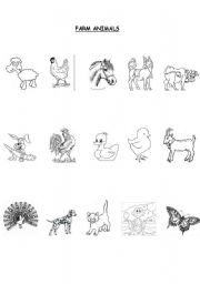 English Worksheets: All Types of Animals