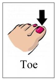 English Worksheets: Body Flashcards