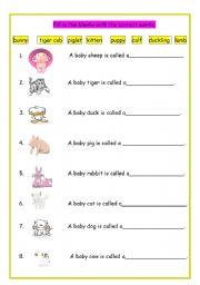 English Worksheets: Baby Animal