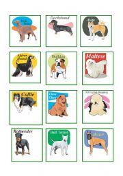 English Worksheet: Dog breeds