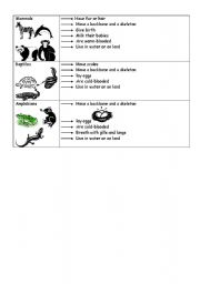 English Worksheets: Animals classification