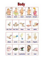 English Worksheets: parts of the body 1/2 (15.08.09)