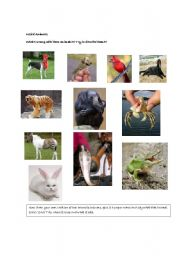 English Worksheets: Weird animals-Funny activity