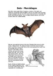 English worksheet: Bats