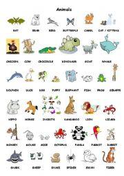 English Worksheets: Flyers Animals