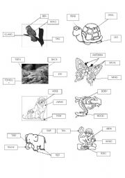 English Worksheet: Animals-Parts of the Body
