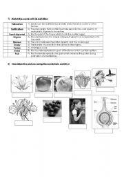 plants worksheets. Black Bedroom Furniture Sets. Home Design Ideas