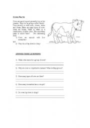 English Worksheets: Cow Facts