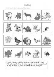 English Worksheets: animals pics