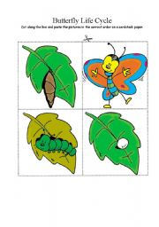 English Worksheet: Butterfly life cycle