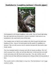English Worksheet: Australian Animals Poster Reading
