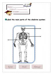 English Worksheets: skeleton