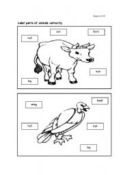 English Worksheets: Parts of animal