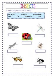 math worksheet : english teaching worksheets the animals : Insects Worksheets For Kindergarten