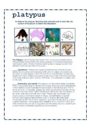 English Worksheets: The Platypus
